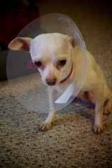 Cone of Shame…