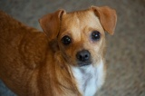 Sasha (Adopted 7/20/12)