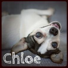 ChloeAdopted