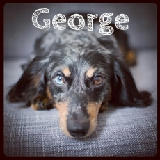 GeorgeAopted