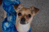 Miss Peach (Adopted4/10/13)