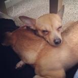 Peach Makes a Good Pillow