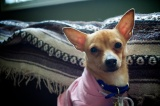 Tyco Brown (Adopted4/27/13)