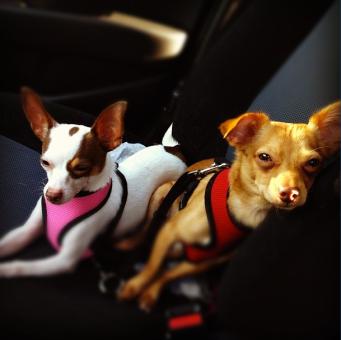 LadyG & Macho