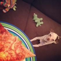 I can haz pizzah?