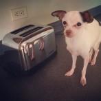 Toaster Sized