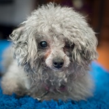 Dottie (Adopted 3/29/14)
