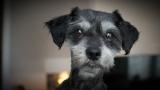 Mitzi (Adopted 7/27/14)