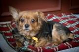 Sassy (Adopted 6/11/14)