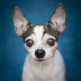Chloe (Adopted 8/30/14)