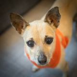 Coco – Adopted 10/5/14